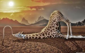 Giraffe-Drinking-Water-Images-540x337